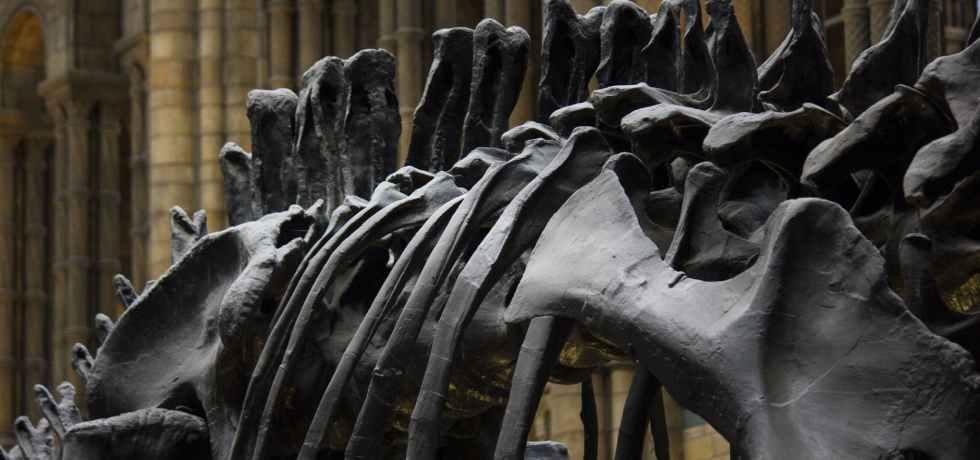 architecture bones building city