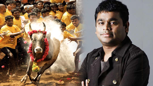 Rahman on 'fast' track for Jallikattu