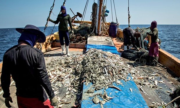 Fishermen back to sea as fishing ban ends, sea food prices to come down