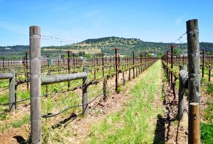honig-vineyards-2