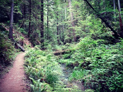 The Fern Canyon Trail in Russian Gulch State Park, en route to the waterfall.