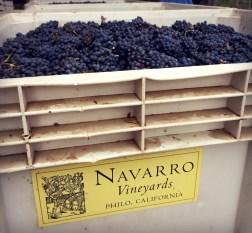 Pinot grapes at Navarro Vineyards.