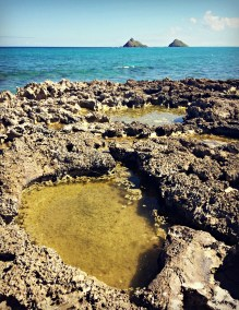 Rocky pools on Flat Island, with a view of the Mokulua Islands in the distance.