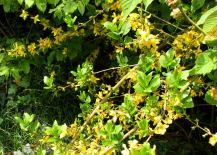 Groene planten (4)