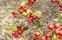 Groene planten (6)