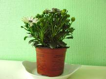 Groene planten (7)