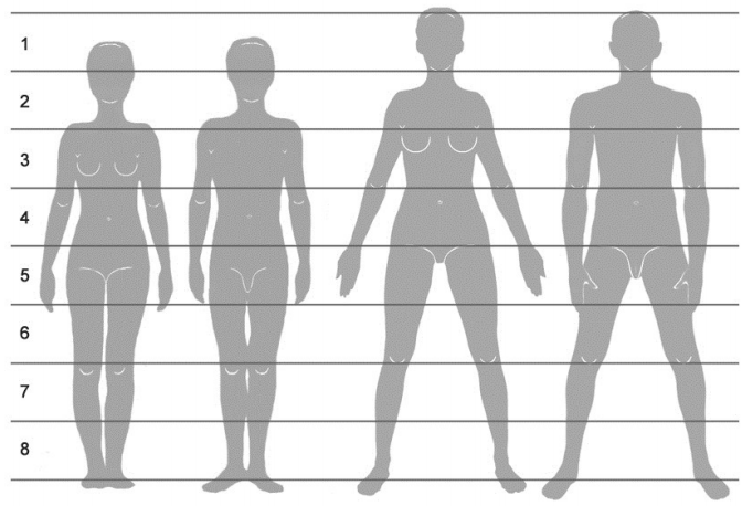 פרופורציות גוף האדם