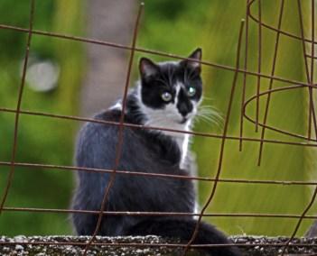 1_small_cat