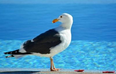 Cabo Bird