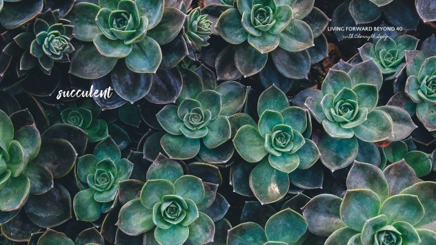 Succulent desktop wallpaper
