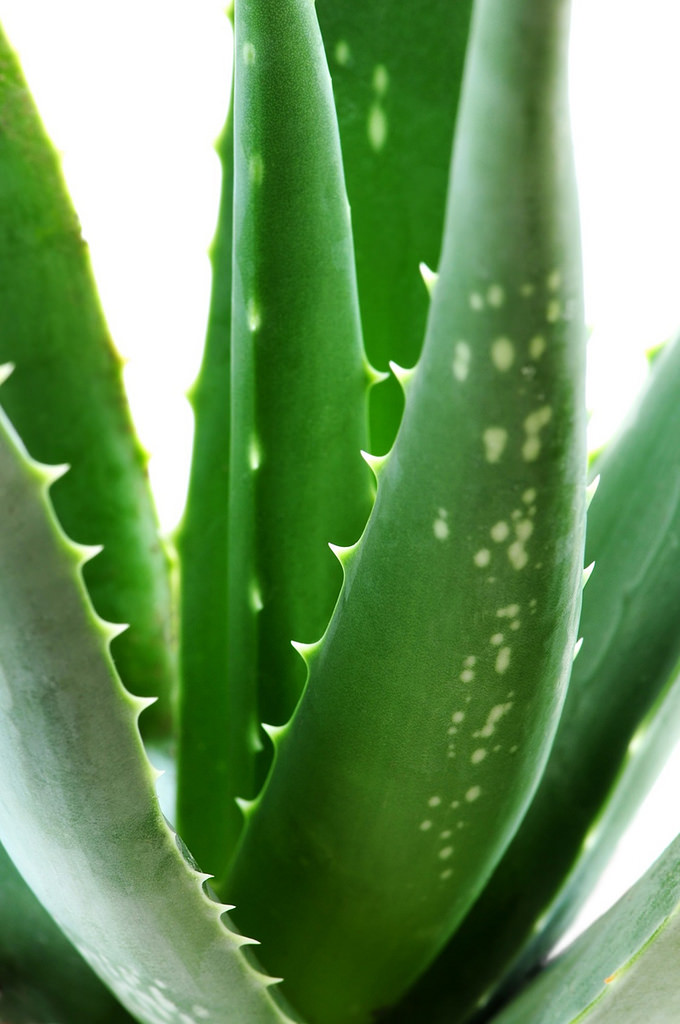 Aloe Vera Review Alternative Health Dr Organic Natural Beauty