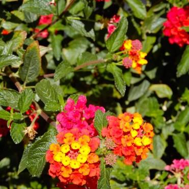 Morocco flowers DSCN8447