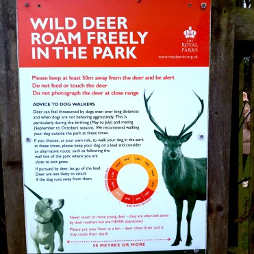 Richmond Park London Deer cherrylsblog.com 20201228_130739