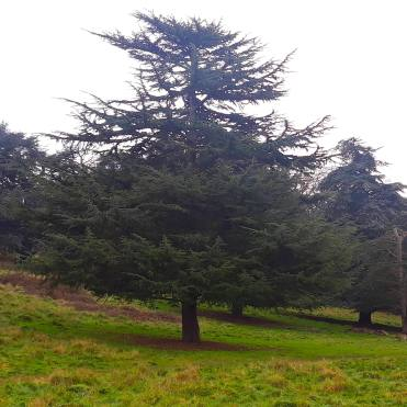 Richmond Park London trees cherrylsblog.com 20201228_131126