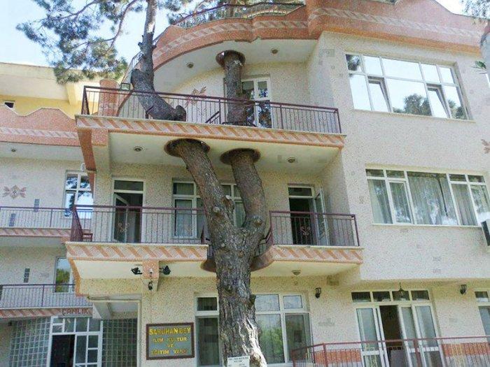 1. Сначала здесь было дерево дерево, здание