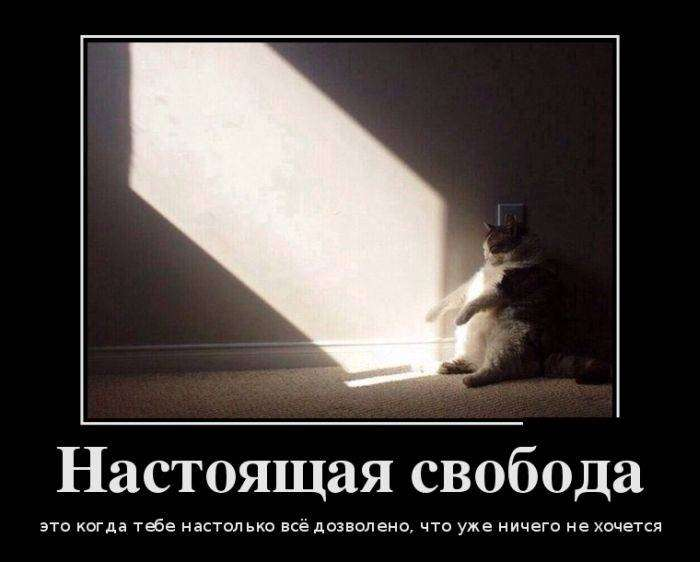 Демотиваторы №1175 (30 фото)
