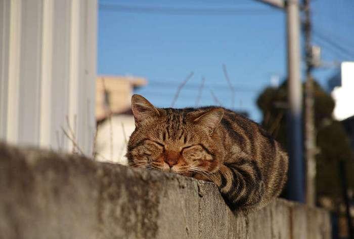 Очень колоритные уличные коты.