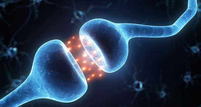 Открыт новый механизм по контролю человеческой памяти-2 фото-