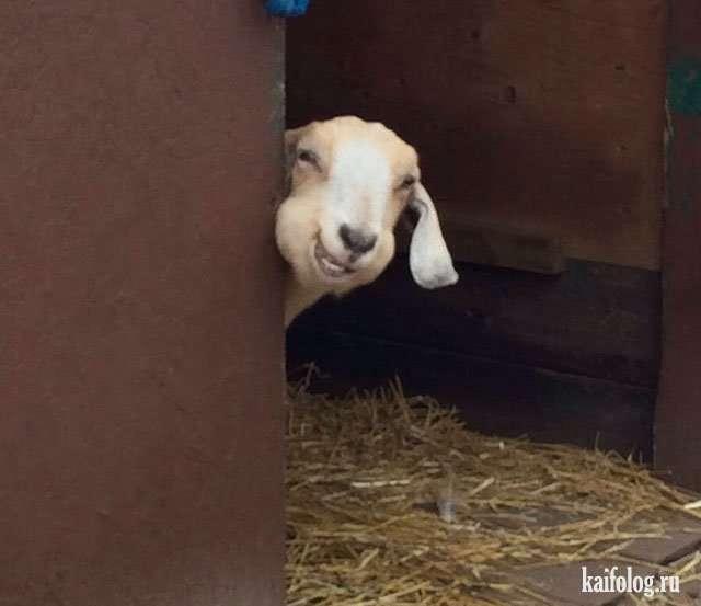 Прикольные и забавные фото животных (50 штук)
