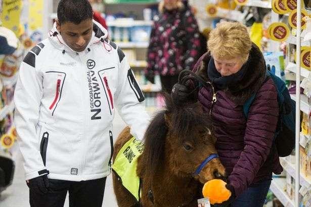 Необычный поводырь: вместо собаки - миниатюрная лошадка