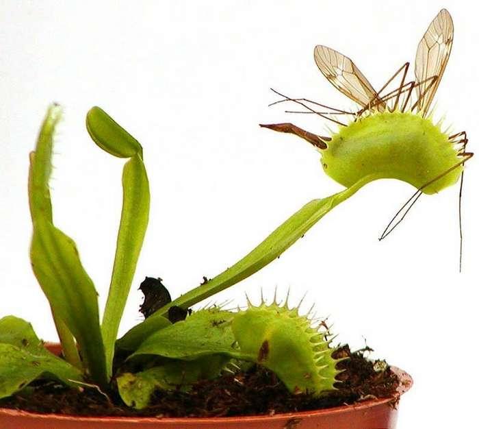 Самые жуткие растения в мире, которые растут, возможно, у вашего дома