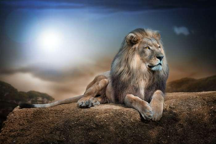 99 мотивирующих цитат -львов-
