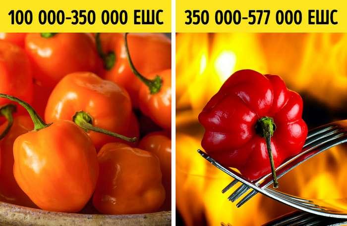 Шкала жгучести идругие характеристики перца, которые стоит узнать любителям острого