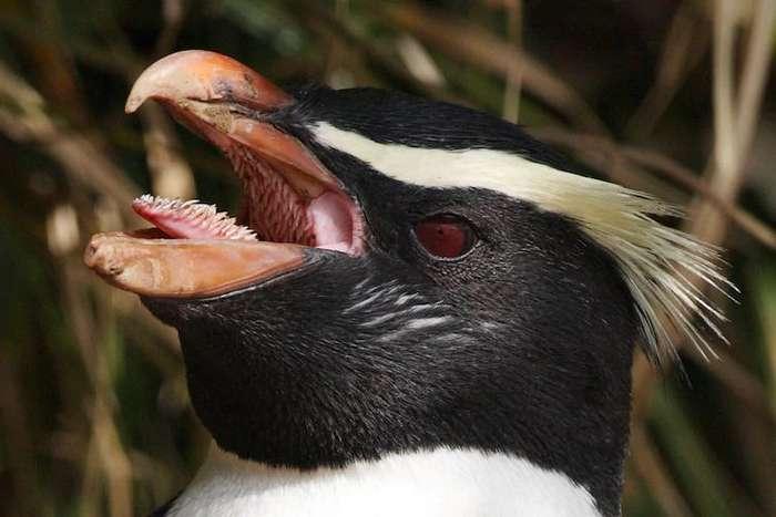 Зубастый пингвин и личинка под микроскопом: привычные вещи могут казаться пугающими (фото)