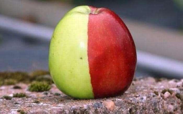 Вы это пробовали? Салак и другие удивительные фрукты со всего света