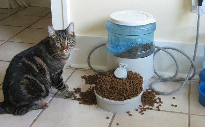 18 толстых котов, которым стоит сесть на диету-18 фото-