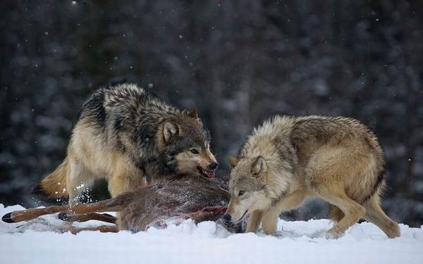10 верных способов быть убитым животными