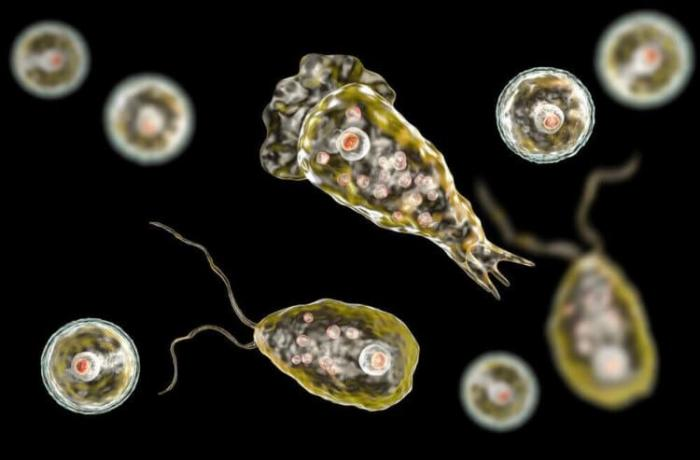 Идеальный убийца — амеба, поедающая мозг (3 фото)