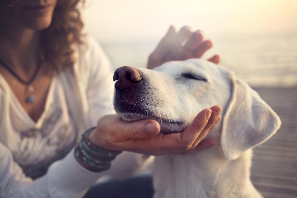 Safeguarding your pet