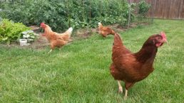 compassionate farming