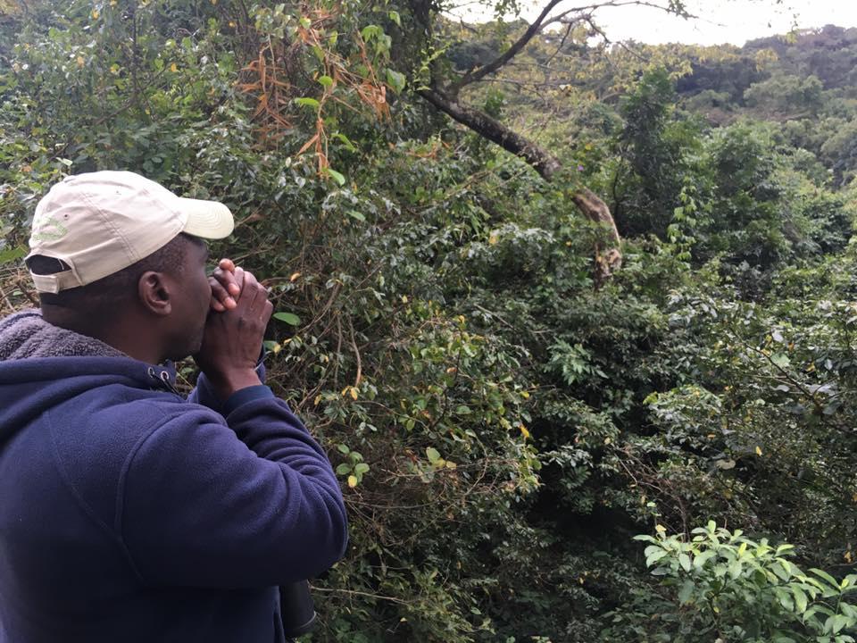 Birdguide Jotham calling the Green Malkoha
