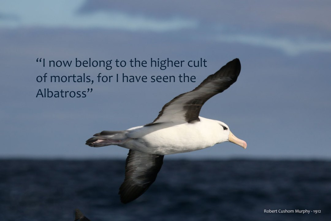 "Quote I""ve seen an albatross"