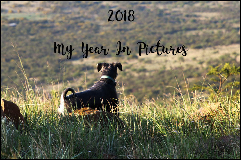 2018 My Year in Pictures