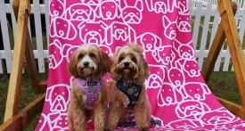 dog show cheshire