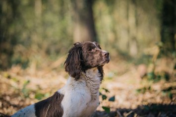CheshireGundogs-107