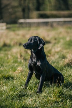 CheshireGundogs-202