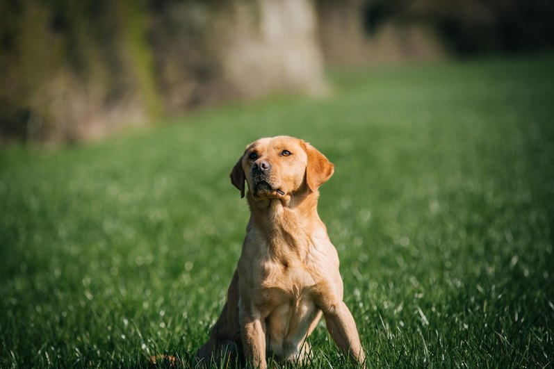CheshireGundogs-44
