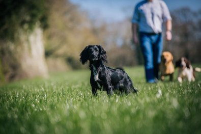 CheshireGundogs-9
