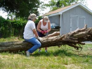 Volunteer cut up the fallen tree.