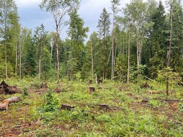 Филипповский лес