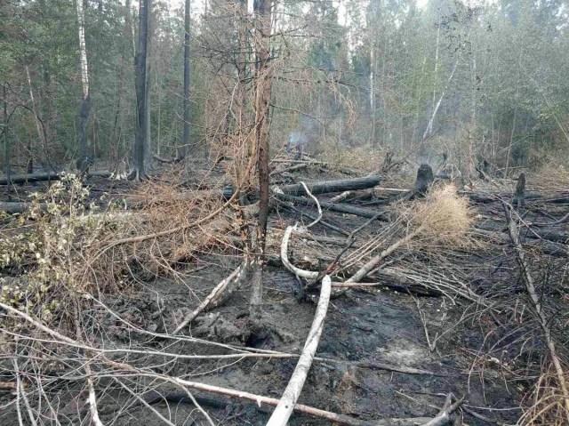 МЧС лесные пожары
