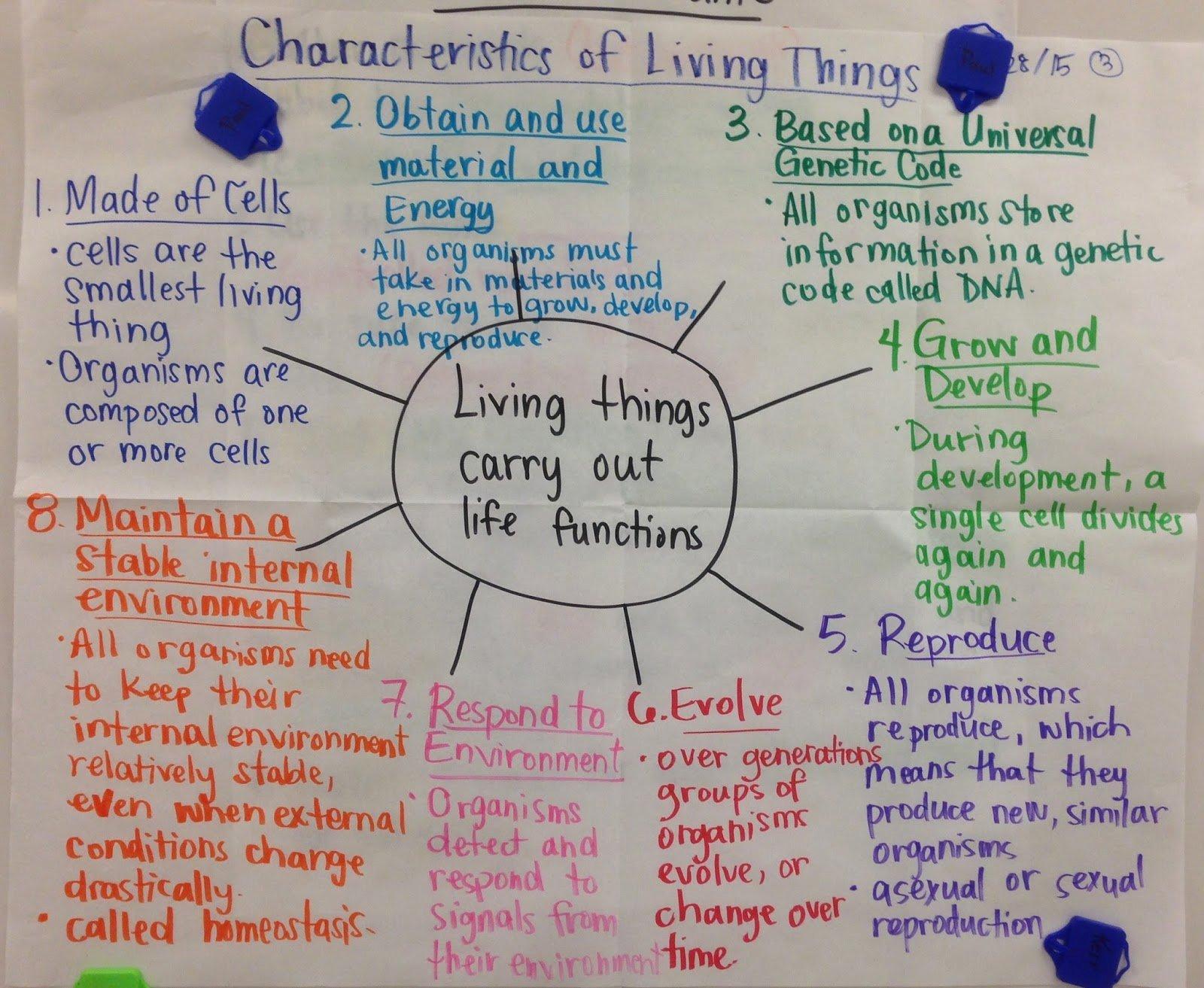 50 Characteristics Of Life Worksheet Answers