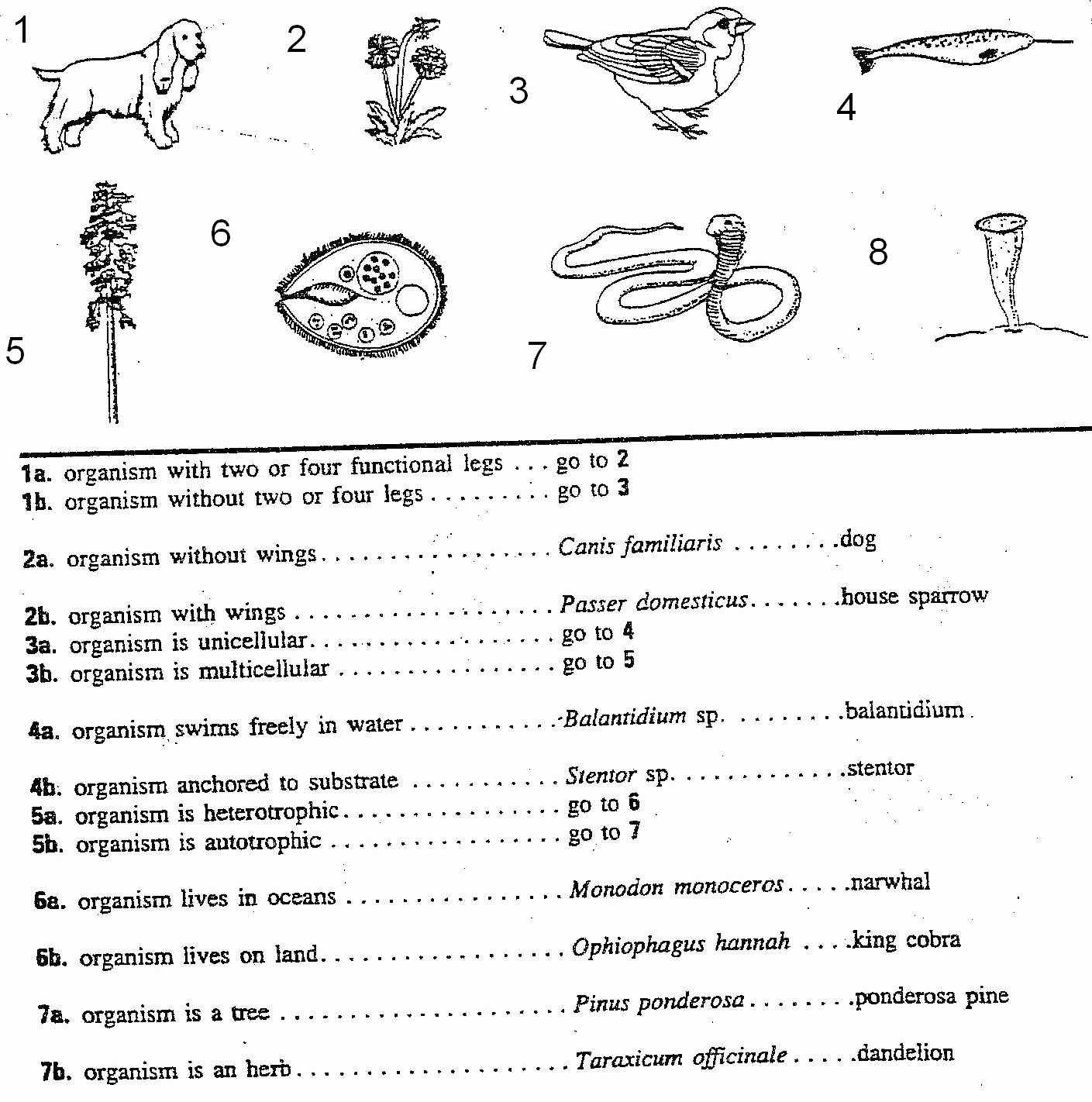 50 Dichotomous Key Worksheet Middle School