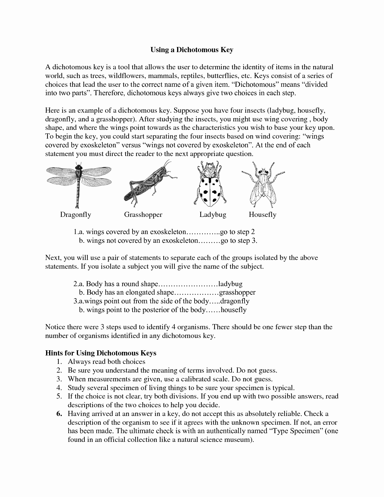 50 Dichotomous Key Worksheet