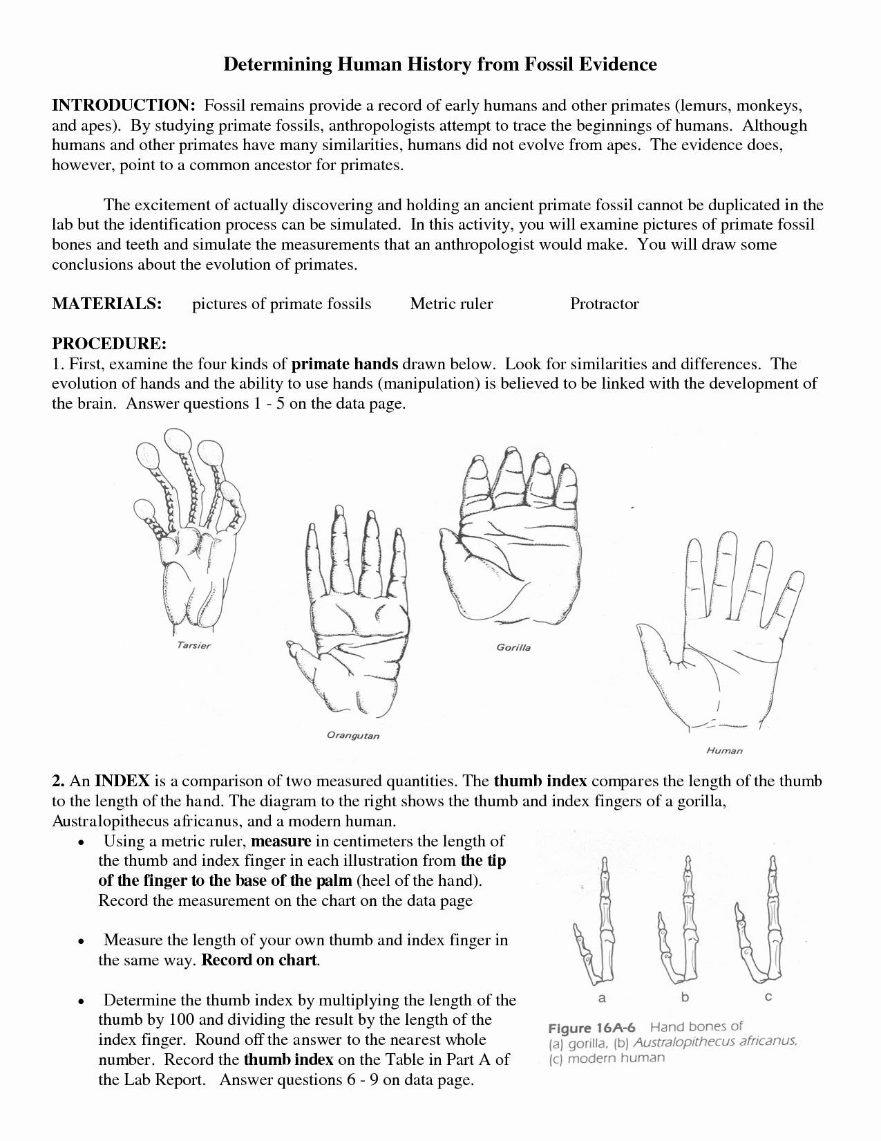 50 Evidence Of Evolution Worksheet Answers