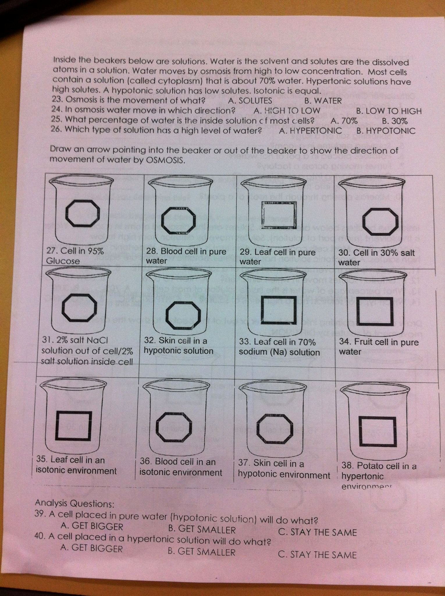 50 Passive And Active Transport Worksheet